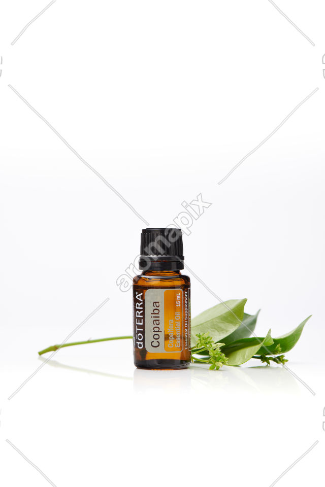 doTERRA Copaiba on white