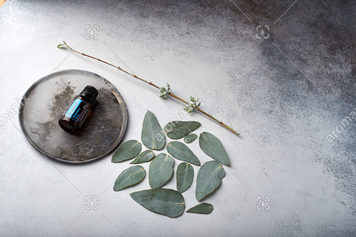 doTERRA Breathe and eucalyptus leaves on white concrete