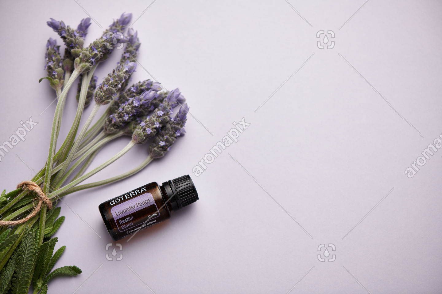 doTERRA Lavender Peace and lavender flowers on light purple card stock