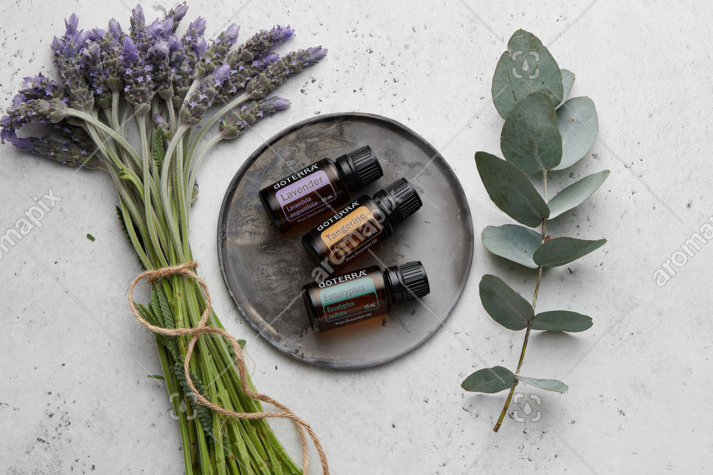 doTERRA Lavender, Tangerine and Eucalyptus with lavender flowers and eucalyptus stem on white