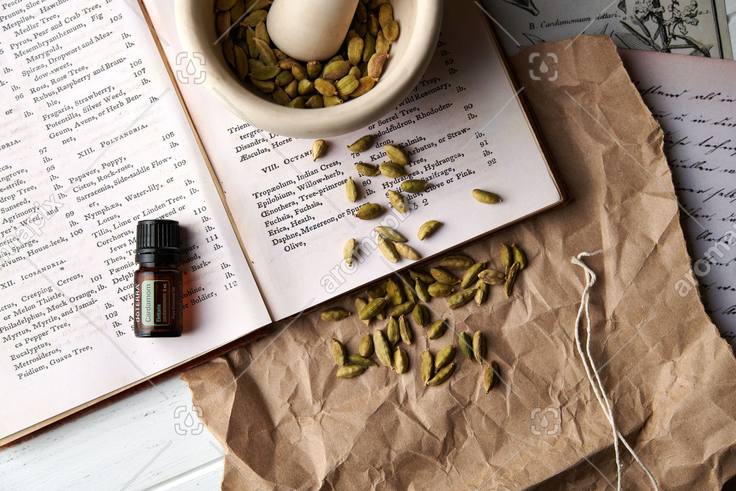 doTERRA Cardamon with dried cardamon seed pods in a mortar and pestle