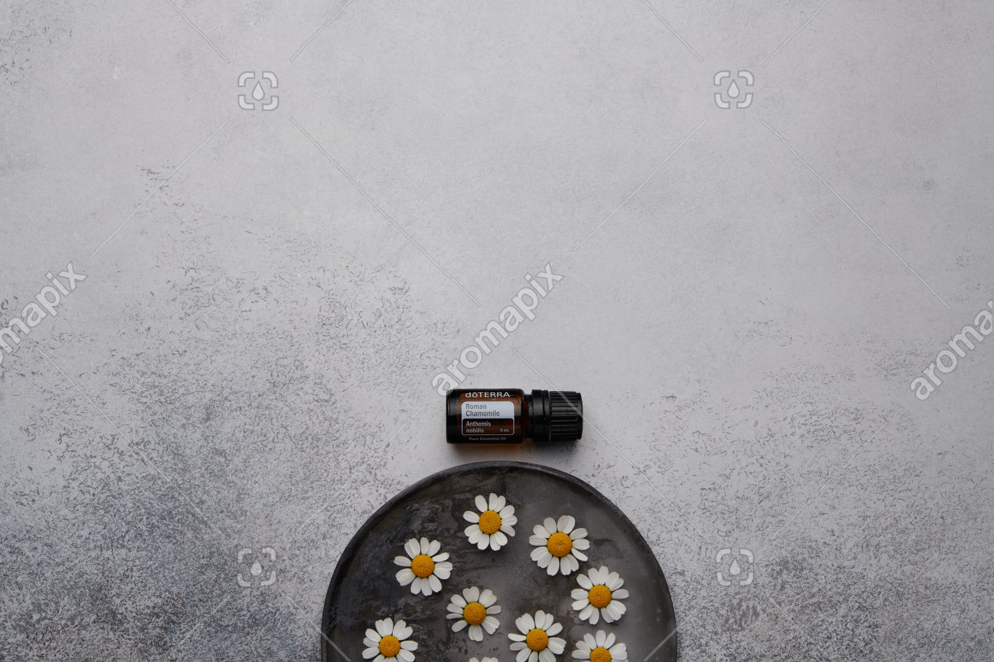 doTERRA Roman Chamomile with chamomile flowers on white