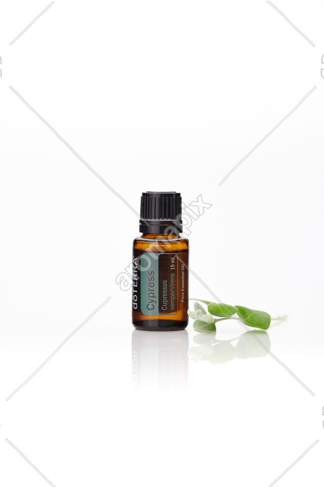doTERRA Cypress with leaves on white