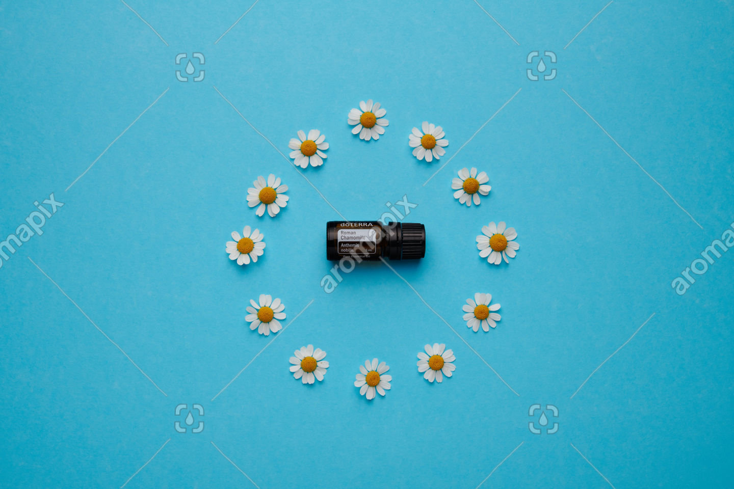 doTERRA Roman Chamomile with chamomile flowers on blue