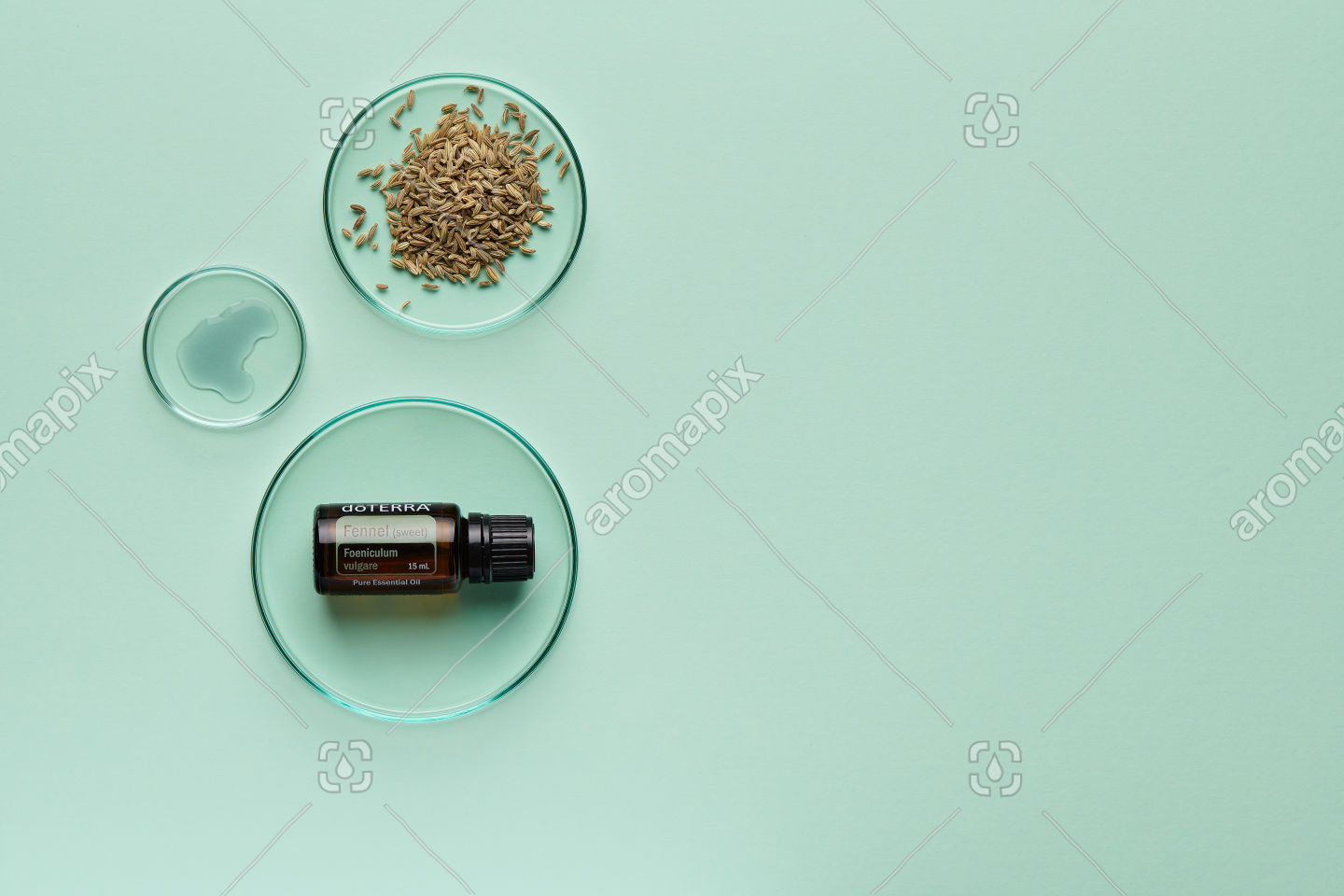 doTERRA Fennel with fennel seeds on pale green