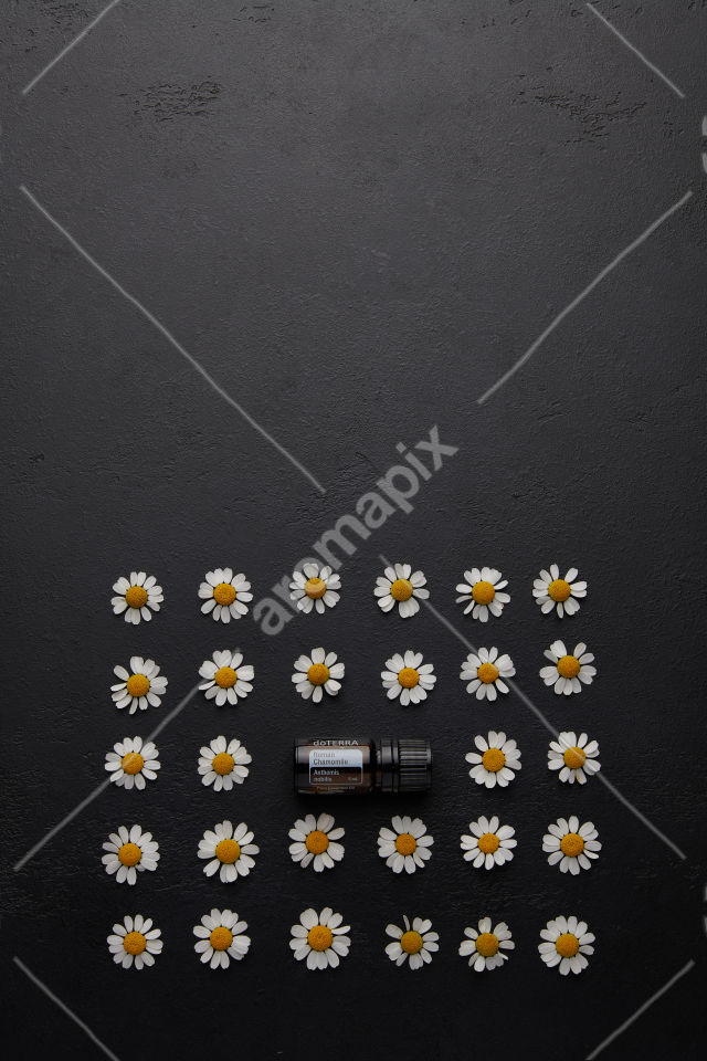 doTERRA Roman Chamomile with chamomile flowers on black