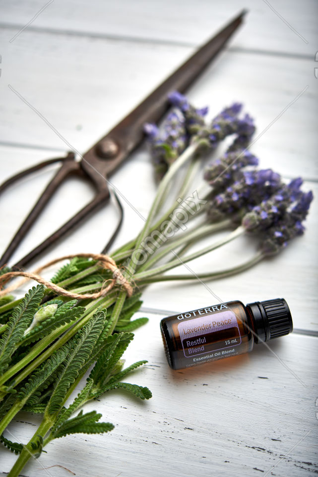 doTERRA Lavender Peace and lavender flowers on white wooden background