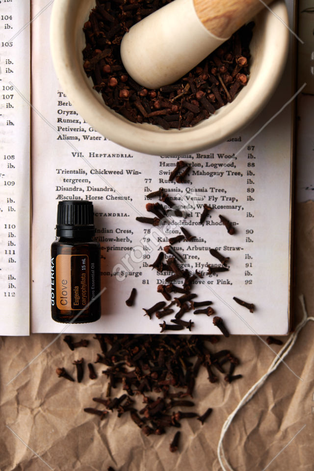 doTERRA Clove with clove buds in mortar and pestle