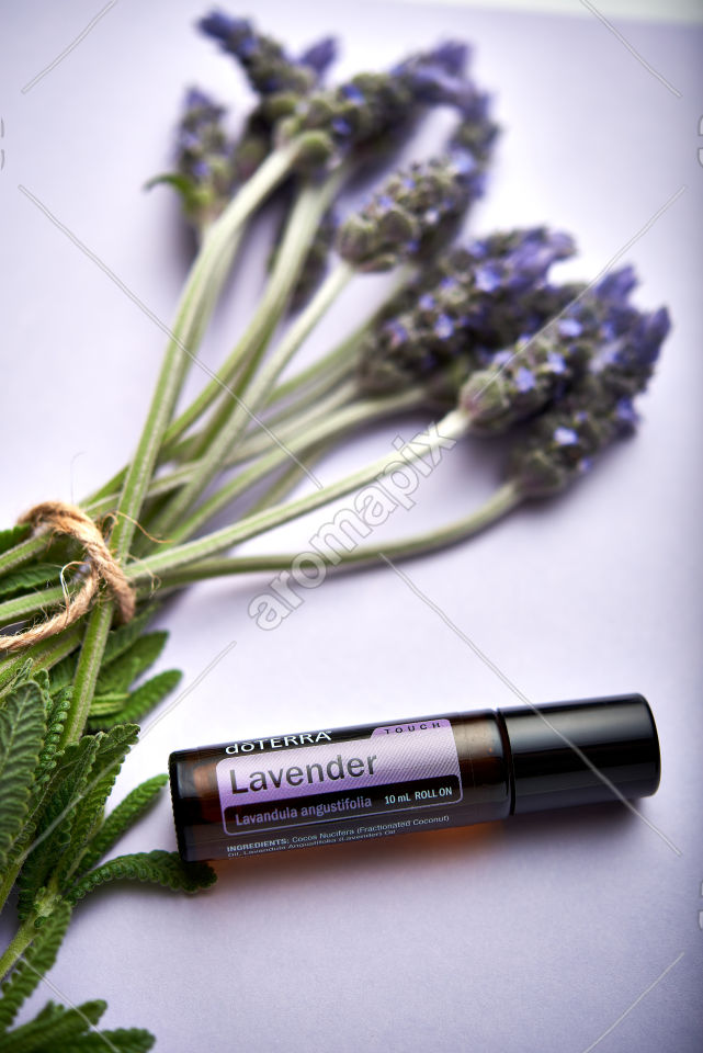 doTERRA Lavender Touch and lavender flowers on light purple