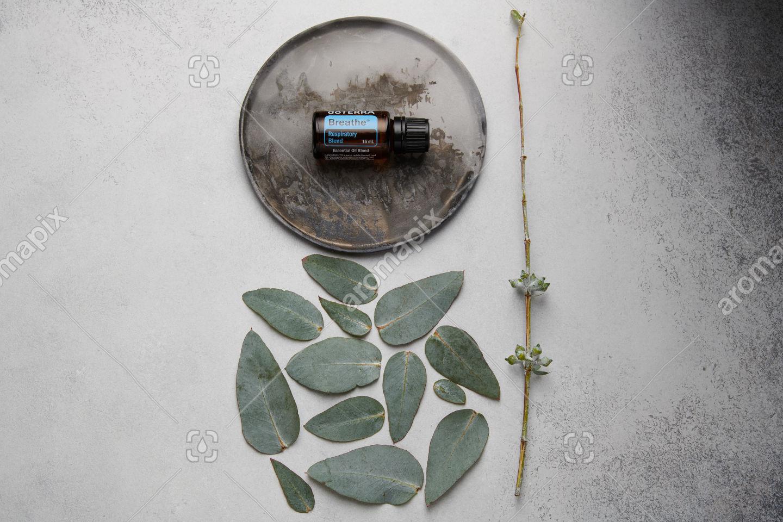 doTERRA Breathe and eucalyptus leaves on white concrete