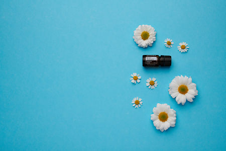 doTERRA Roman Chamomile with white flowers on a blue card stock background.