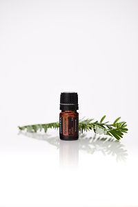 doTERRA Arborvitae with leaves on a white background with reflection.