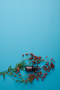 doTERRA Pink Pepper and pink peppercorn branch on an aqua blue background.