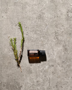 doTERRA Cedarwood essential oil and a green plant stem lying on gray stone in sunlight.