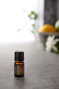 doTERRA Douglas Fir on a bench in a rustic setting near a window.