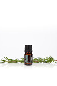 doTERRA Black Spruce with leaves on a white background with reflection.