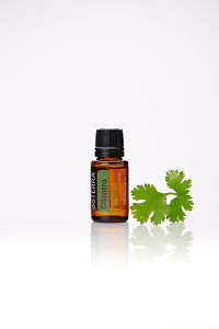 doTERRA Cilantro with cilantro leaves on a white background with reflection.