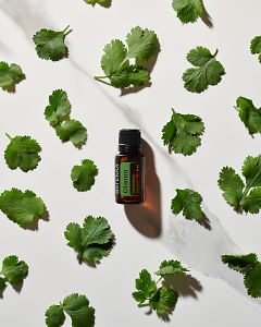 doTERRA Cilantro essential oil and cilantro leaves in direct  sunlight on a white marble background.