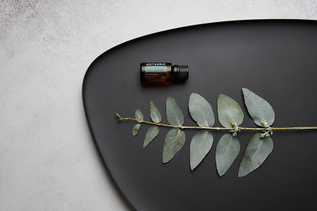 doTERRA Eucalyptus oil and eucalyptus leaves on black melamine plate with white concrete background.