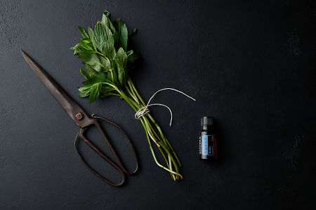 doTERRA Peppermint with vintage scissors and a bunch of mint on a black stone background.