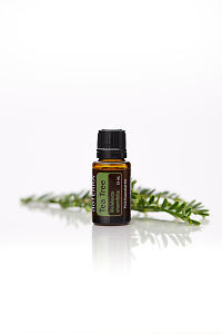 doTERRA Tea Tree with leaves on a white background with reflection.