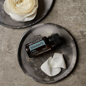 doTERRA Siberian Fir essential oil and flower petals on a ceramic plate and part of a white flower on a ceramic plate on a grey stone background.