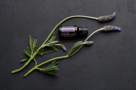 doTERRA Lavender and lavender stems on black concrete  background.