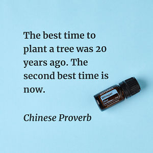 The best time to plant a tree was 20 years ago. The second best time is now. – inspiration quote about doTERRA Whisper printed on a pale blue background.