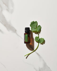 doTERRA Cilantro essential oil and a stem of cilantro leaves in direct sunlight on a white marble background.
