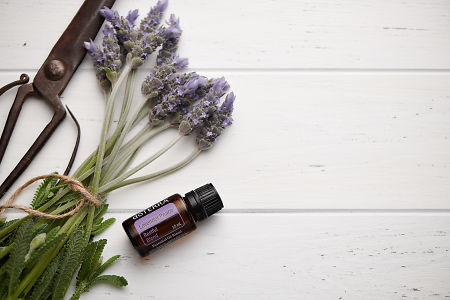 doTERRA Lavender Peace, vintage scissors and lavender stems tied with twine on white rustic background.