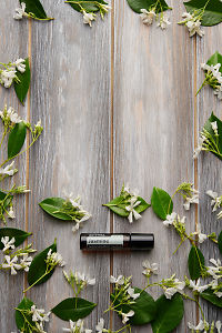 doTERRA Jasmine Touch with jasmine flowers on a faded wooden background.