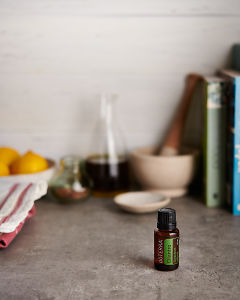 doTERRA Cilantro with kitchen equipment on a gray stone kitchen bench.