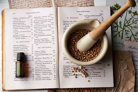 doTERRA Coriander on a vintage botany book with dried coriander seeds  in a mortar and pestle and vintage corriander illustrations.
