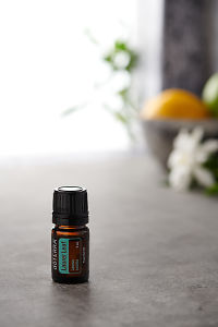 doTERRA Laurel Leaf on a bench in a rustic setting near a window.