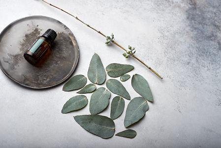 doTERRA Eucalyptus oil on distressed ceramic plate with eucalyptus leaves on white concrete background.