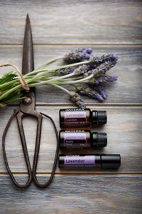 doTERRA Lavender, Lavender Peace, Lavender Touch, vintage scissors and lavender stems tied with twine on distressed wooden background.