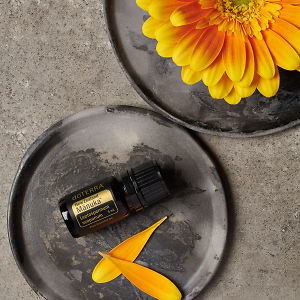 doTERRA Manuka essential oil and flower petals on a ceramic plate and part of a yellow flower on a ceramic plate on a grey stone background.