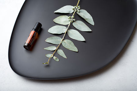 doTERRA On Guard Touch and eucalyptus leaves on black melamine plate with white concrete background.
