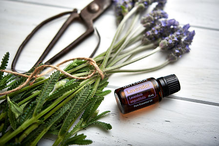 doTERRA Lavender, vintage scissors and lavender stems tied with twine on white rustic wooden background.