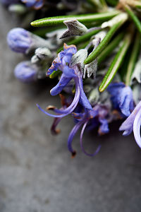 Closeup of rosemary flowers on a rustic ceramic plate.
