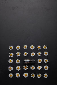 doTERRA Roman Chamomile in the middle of rows of chamomile flowers on a black concrete background.