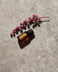 doTERRA Zendocrine essential oil and a pink flower stem lying on gray stone in sunlight.