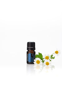 doTERRA Blue Tansy with flowers on a white background with reflection.