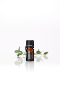 doTERRA Douglas Fir with leaves on a white background with reflection.